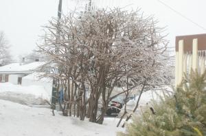 Les arbres glacés sont beaux.